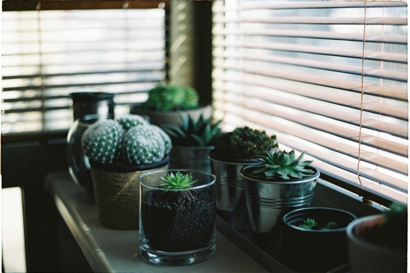 5 houseplants which improve air quality